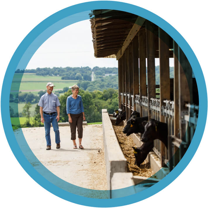 Two cayuga marketing cooperative farmers walking and smiling at their cattle